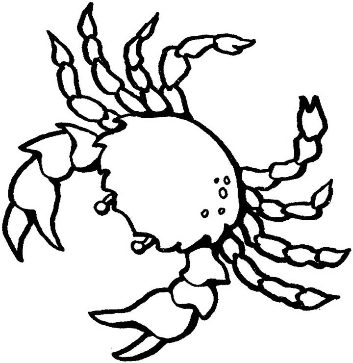 720x740 Crab Outline Coloring Pages