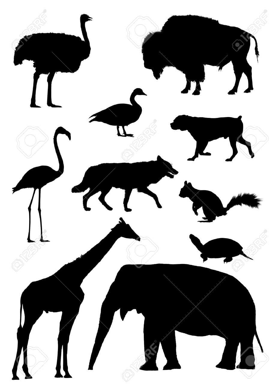 903x1300 Vector Outlines For Animals African Ostrich, Bison, Canadian