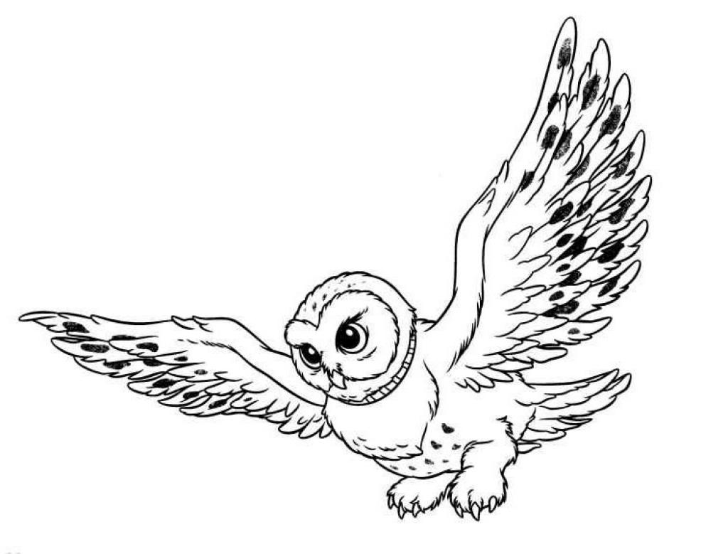 1024x779 Barn Owl Clipart Black And White
