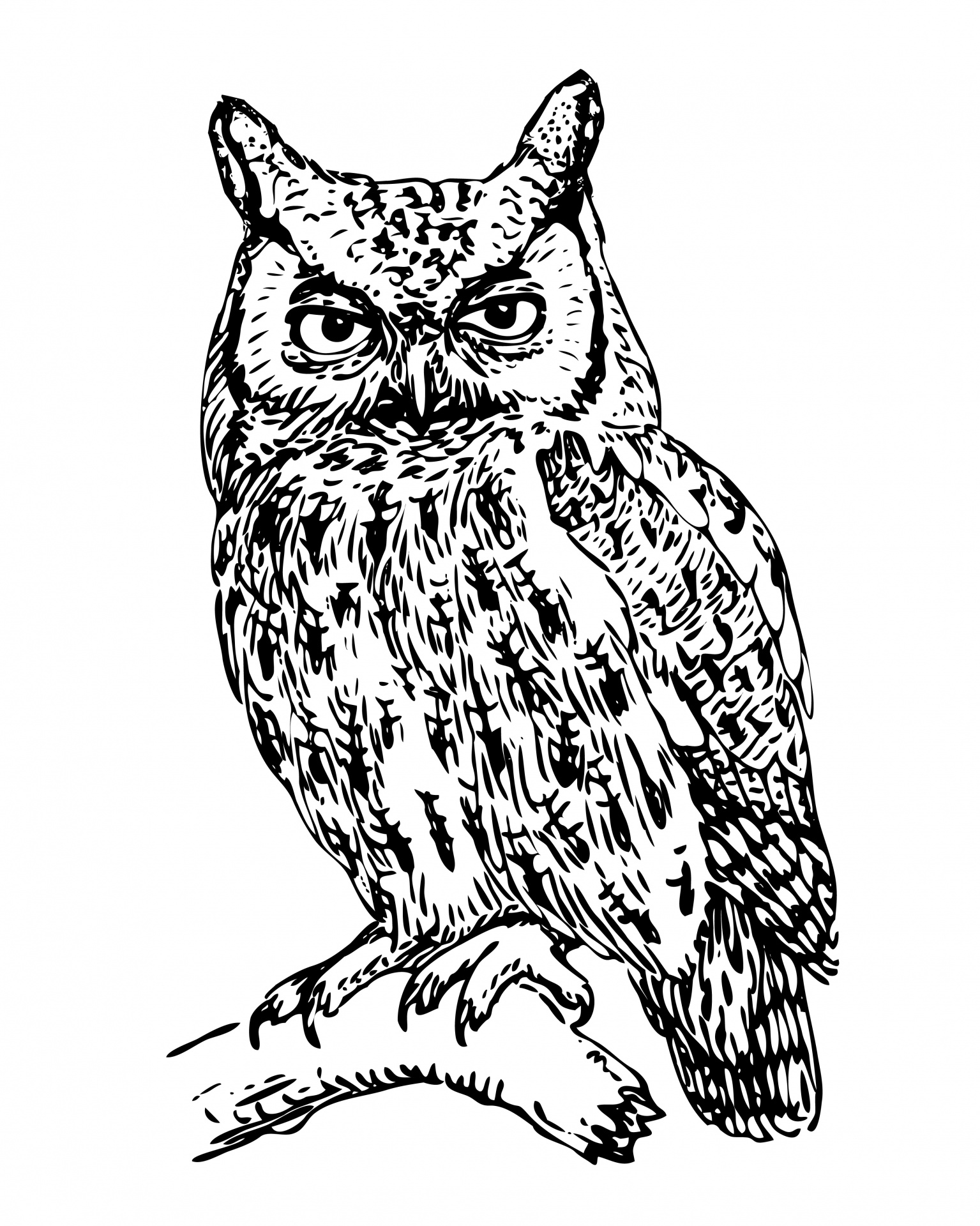 1535x1920 Owl Illustration Clipart Free Stock Photo