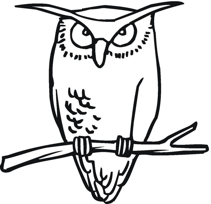 736x710 Barred Owl Clipart Black And White