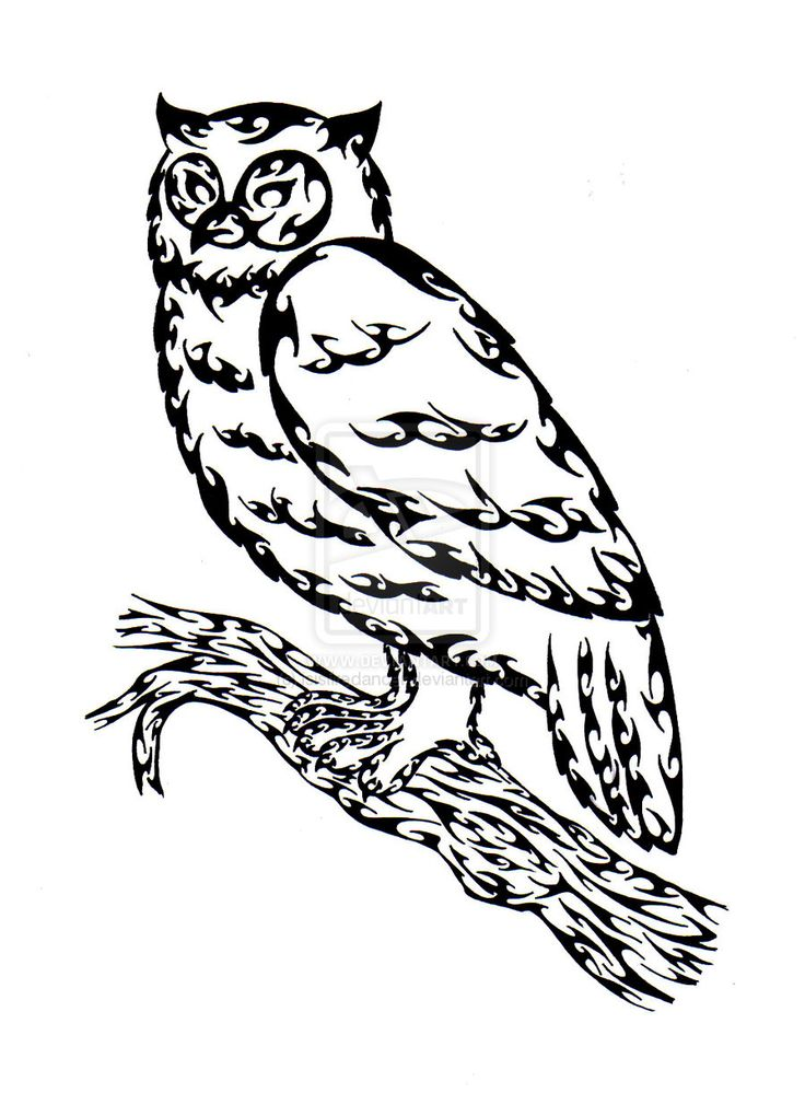 Owl Outline