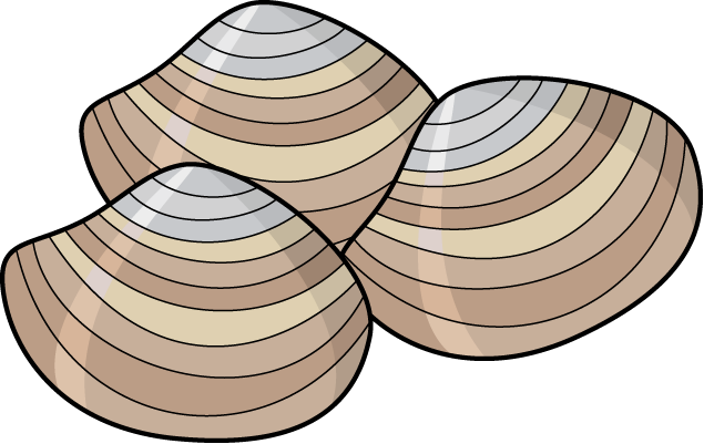 635x401 Food Clipart Clam