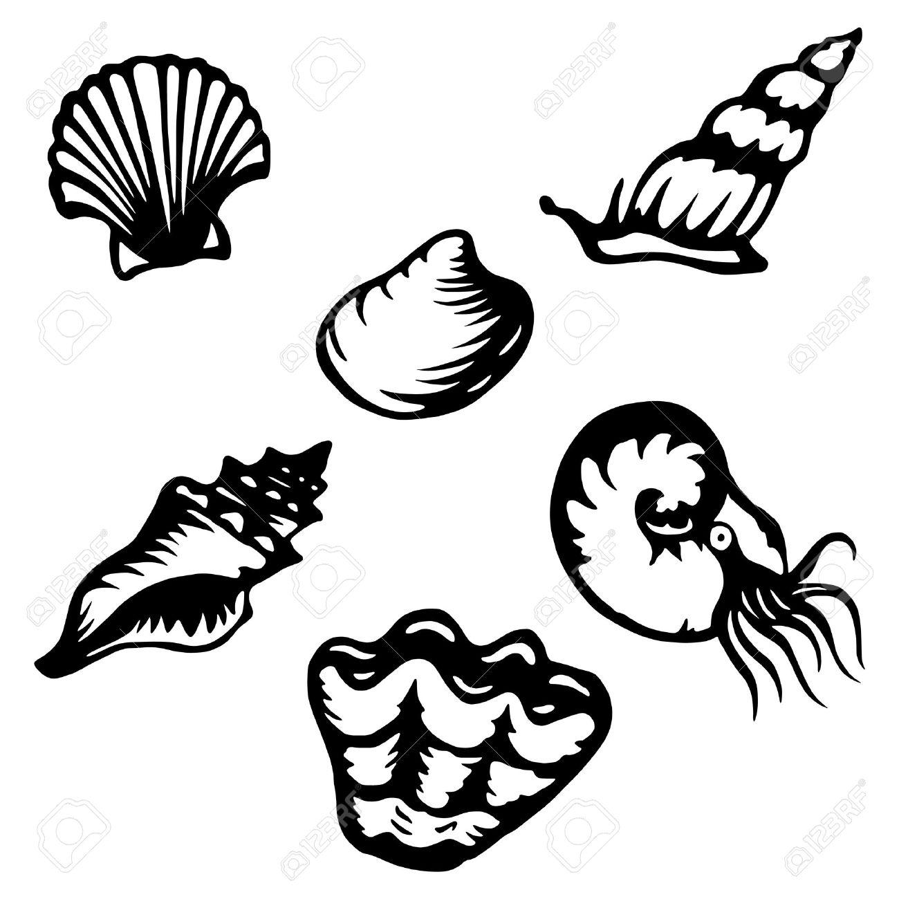 1300x1300 Shell Clipart Shellfish