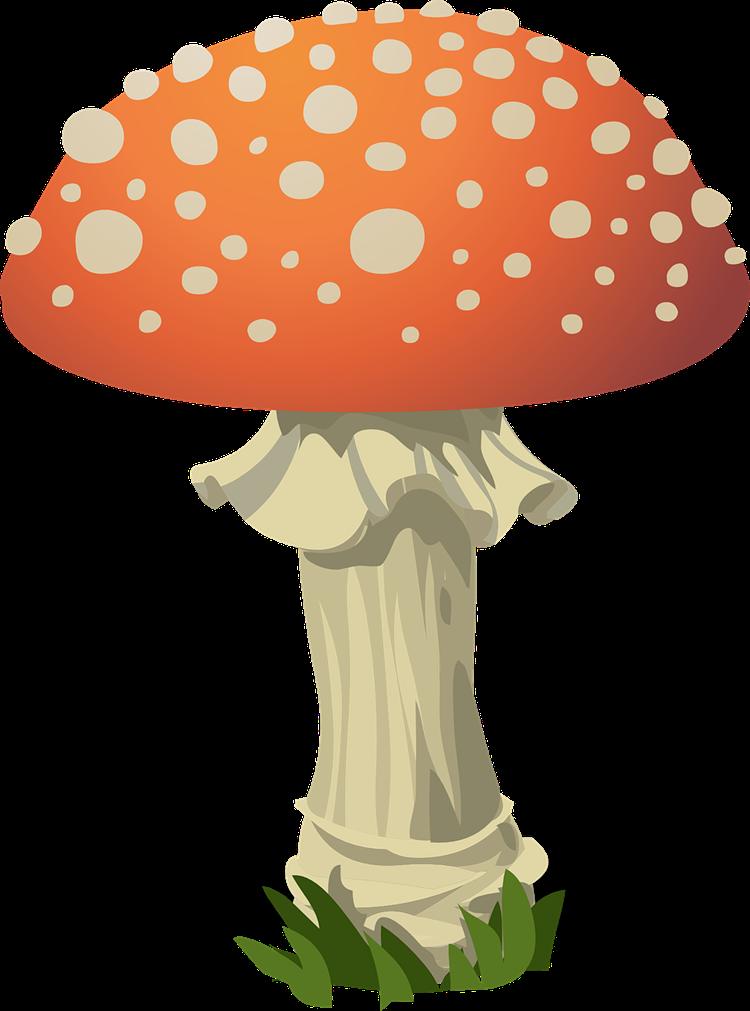 750x1011 Mushroom Clipart Free Download Clip Art