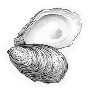300x297 Top 92 Oyster Clip Art