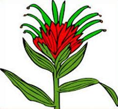 242x223 Free Indian Paintbrush Clipart