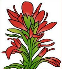 208x231 Free Indian Paintbrush Clipart