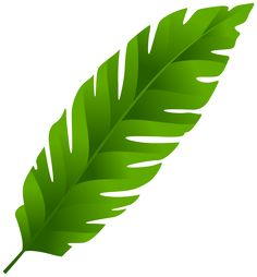 236x254 Leaves clipart palm leaves