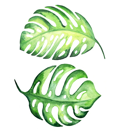 393x437 Leaves clipart tropical leaf