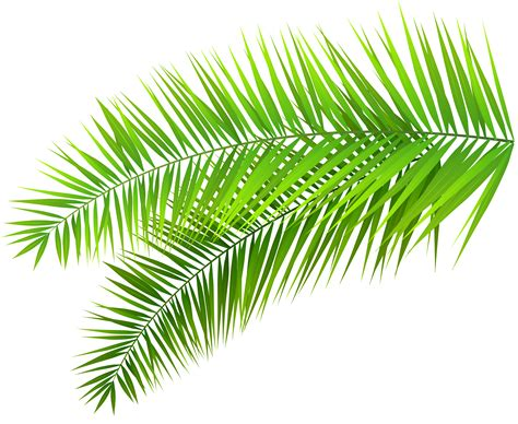 474x388 Palm Trees Silhouette Png Clip Art Image Gallery, Landscape Palms