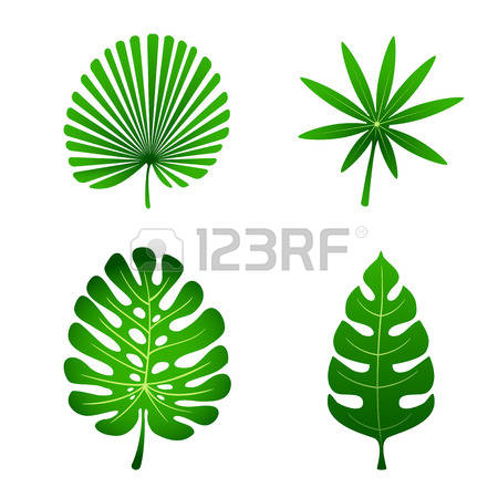 450x450 Isolated leaf clipart, explore pictures