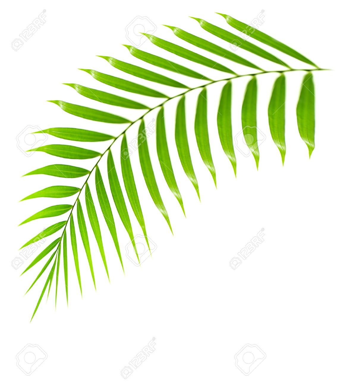 1134x1300 Palm Tree Clipart Palm Frond