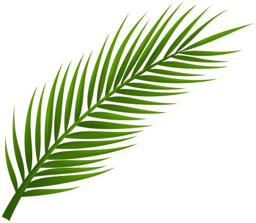 500x436 Palm branches clipart