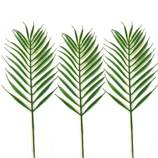 640x640 Popular Palm Sunday Tropical Palm Cycas Leaves