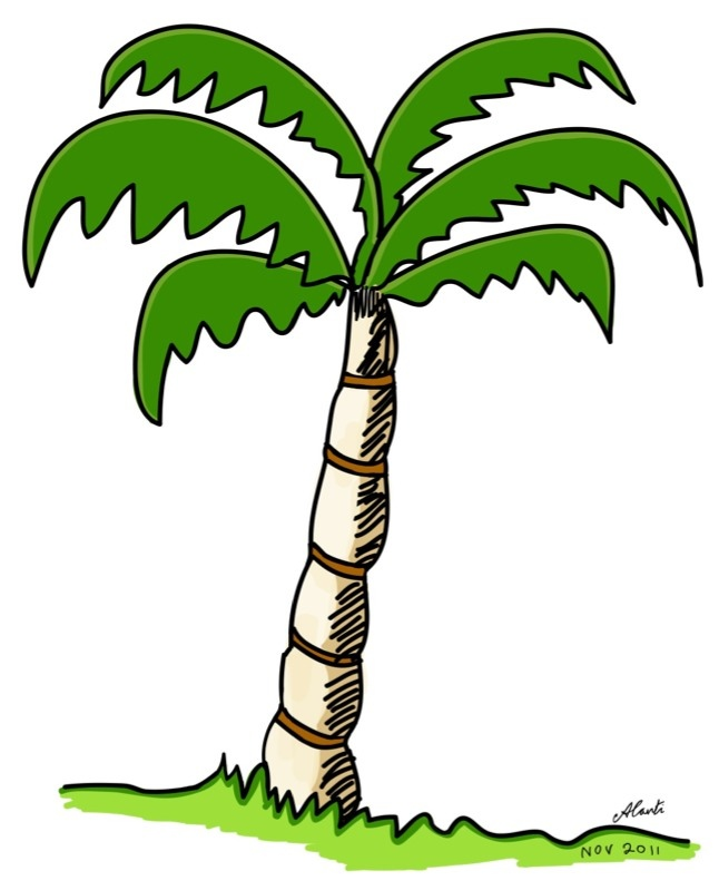 646x799 Palm Tree Drawings