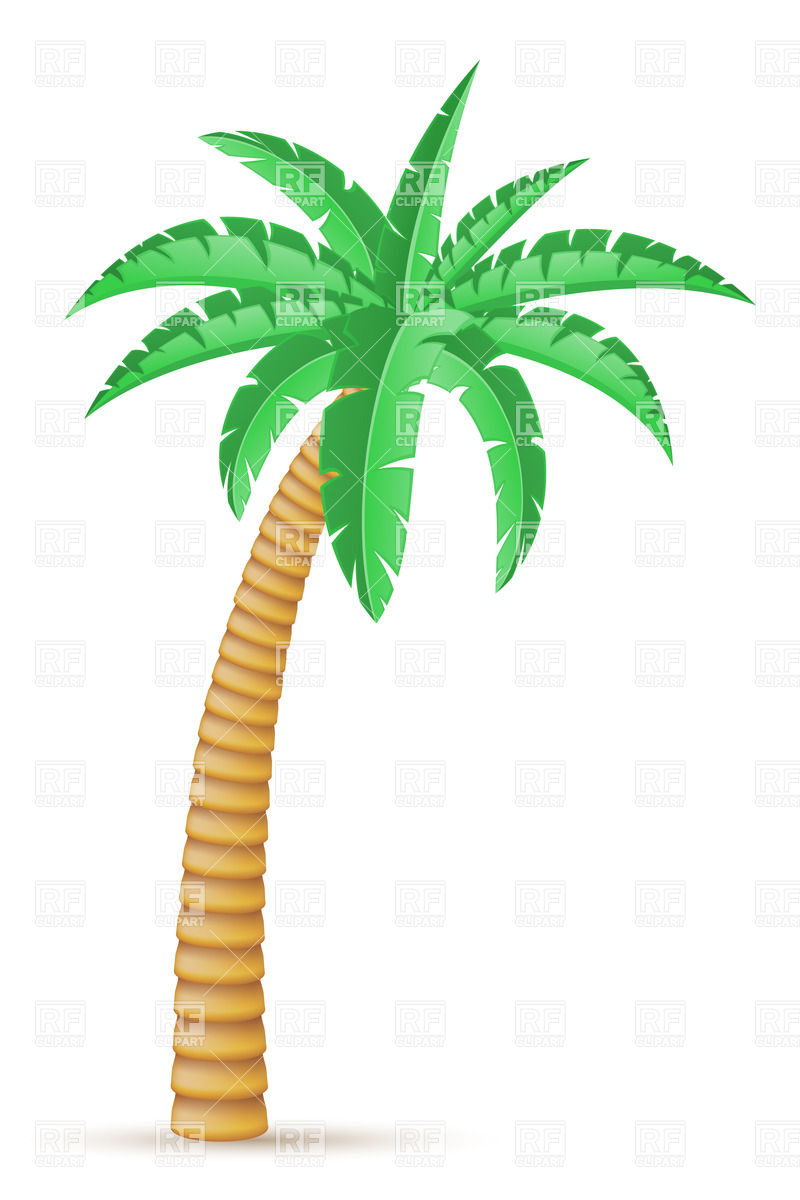 800x1200 Tropical Palm Tree Isolated On White Background Royalty Free