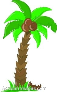 188x300 Palm Tree clipart cocount