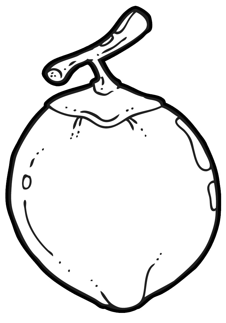 738x1056 Coconut clipart outline