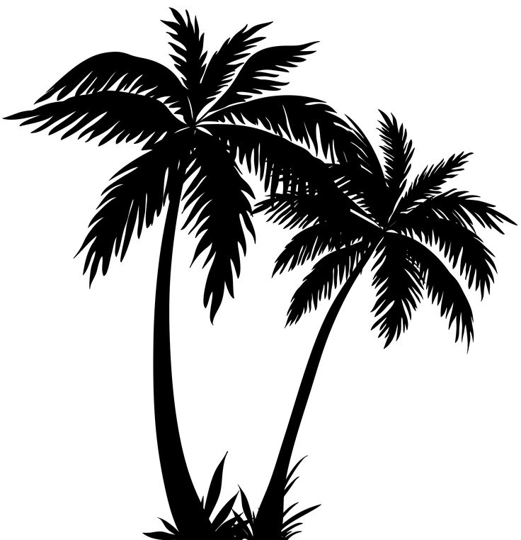 736x762 Palm Trees Clipart Black And White
