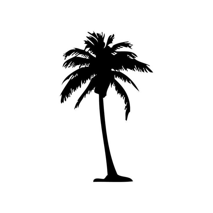 736x736 Palm Tree Clipart White Background