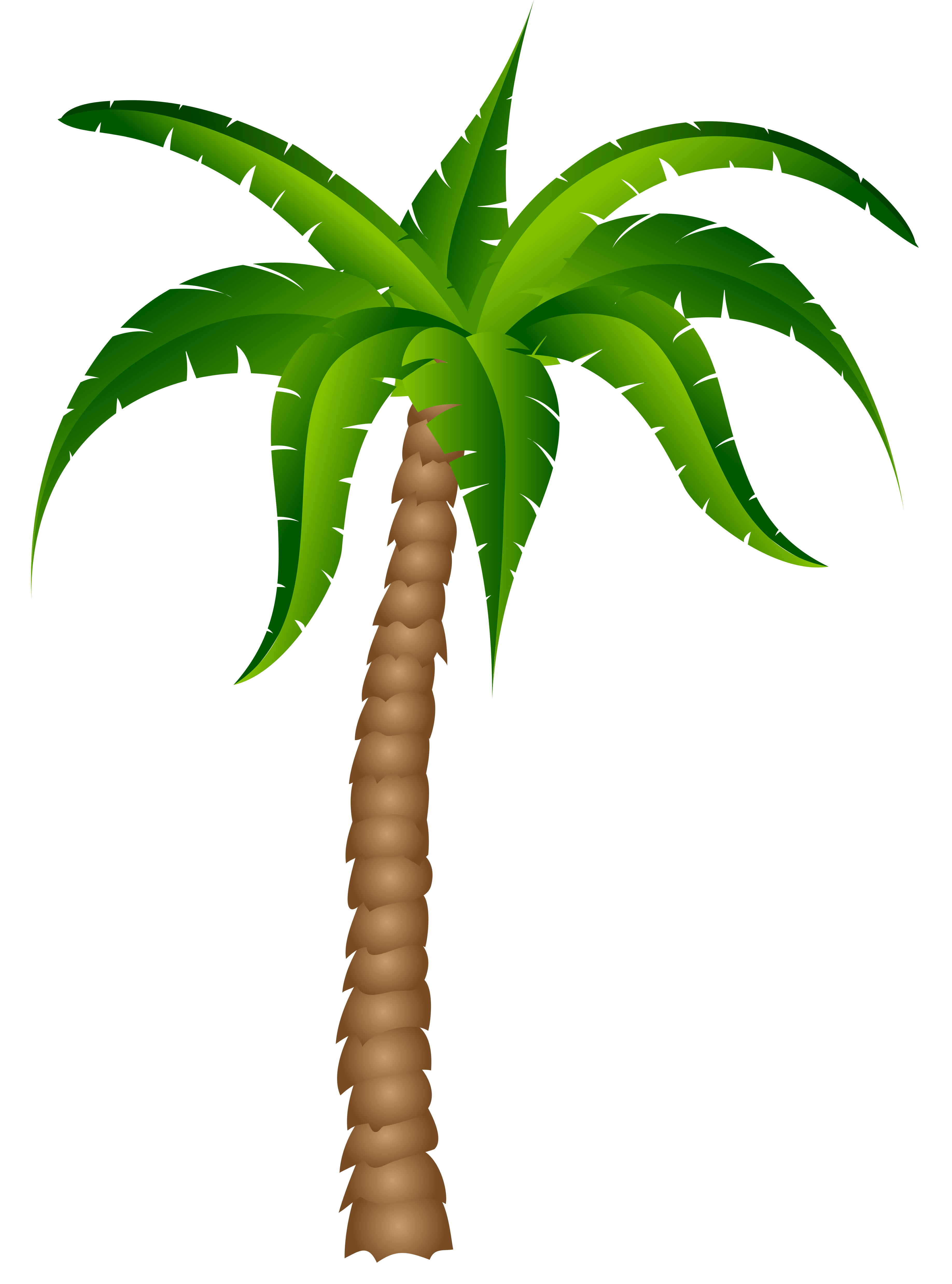 3672x4952 Palm Tree Clipart No Background Reae Donweb