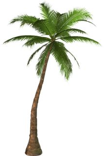 214x320 Free High Resolution Graphics And Clip Art Palm Tree Places