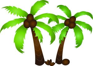 300x213 Palm Tree With Coconuts Clipart