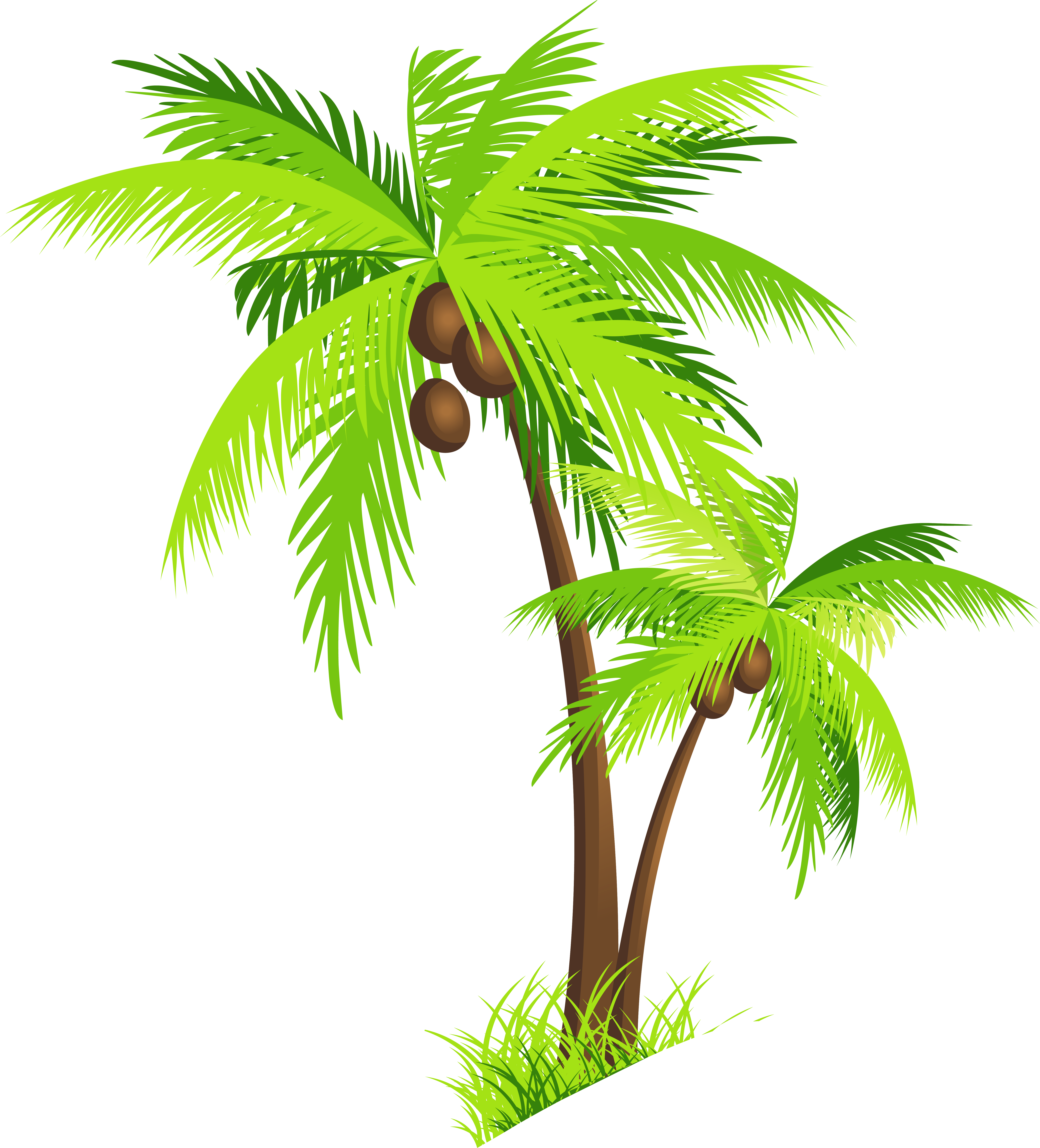 6146x6787 Palm Tree Coconut Clipart Free Images