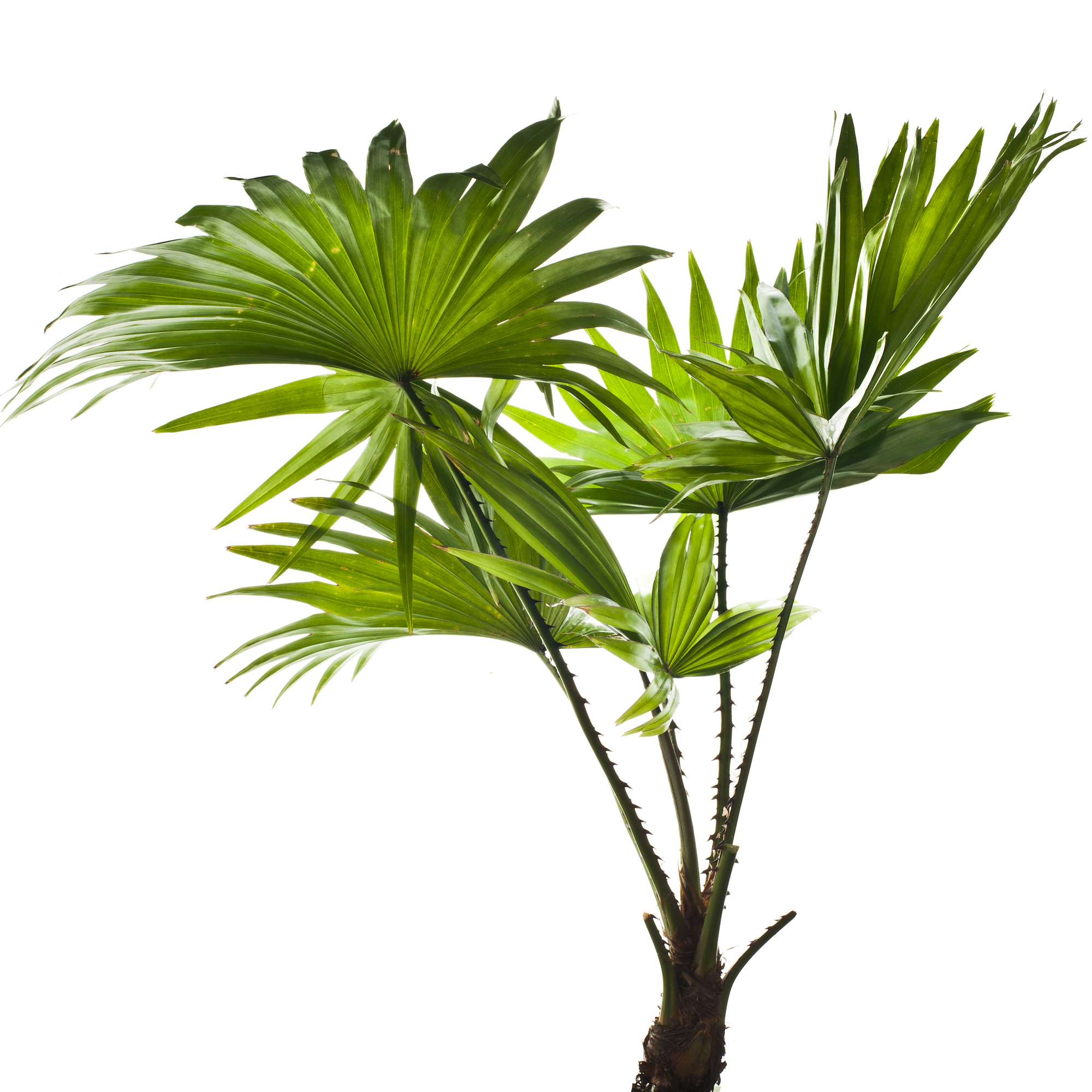 2000x2000 Thoughtful Reasons To Give A Tropical Plant As A Christmas Gift