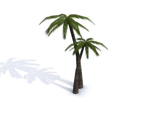 500x400 Palm Tree 3d Model Clipart Panda