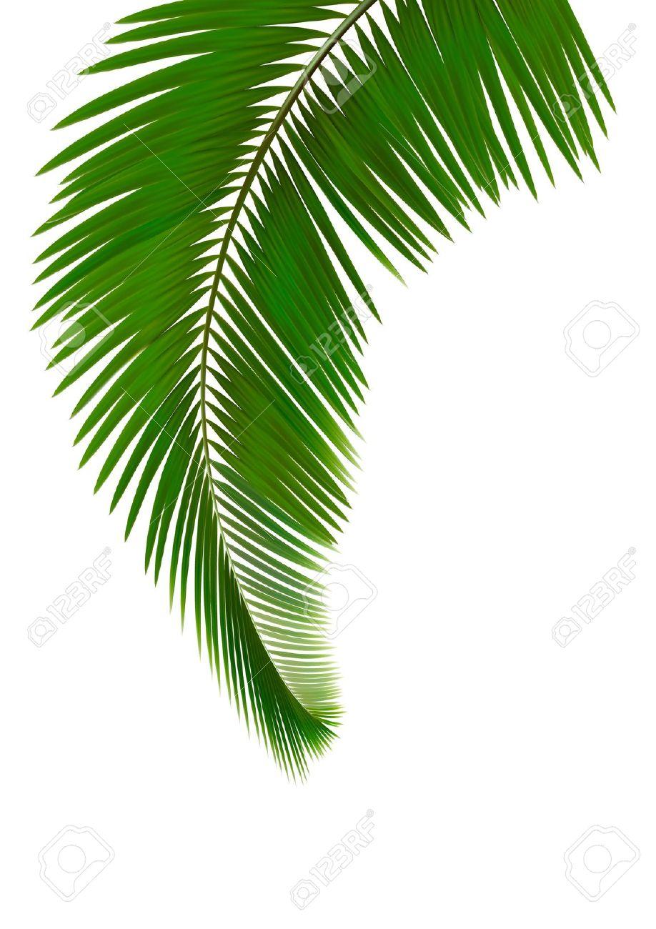 918x1300 Palm Frond Palm Leaf Clipart