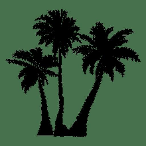 512x512 Palm Palm Tree