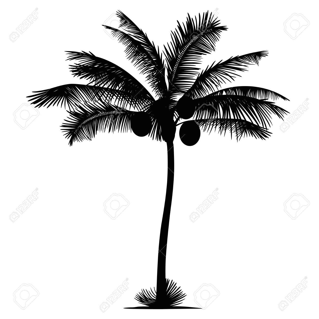 1300x1300 Palm Tree Coconut Silhouette Royalty Free Cliparts, Vectors,