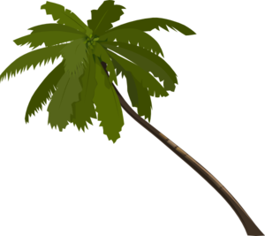 Palm Tree Silhouette Png