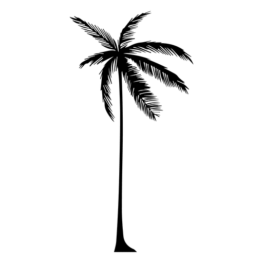 Palm Tree Silhouette Png Free Download Best Palm Tree Silhouette