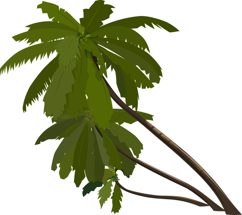 Palm Tree Transparent Background Free Download Best Palm Tree