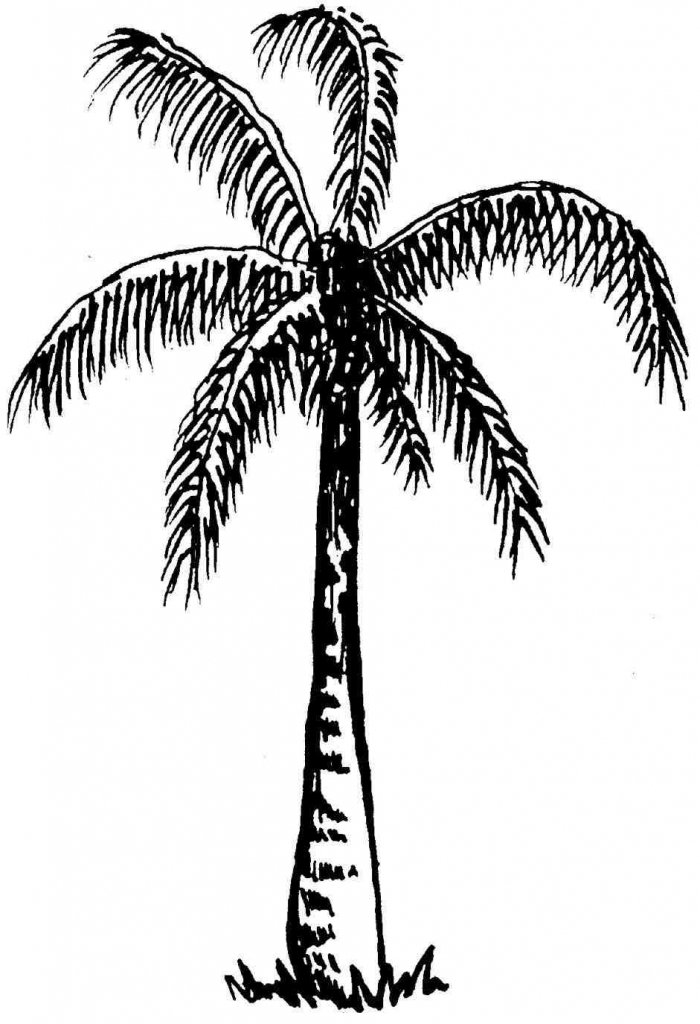 700x1024 Palm Tree Drawing Drawing Palm Tree Vector Palm Tree Clip Art Palm