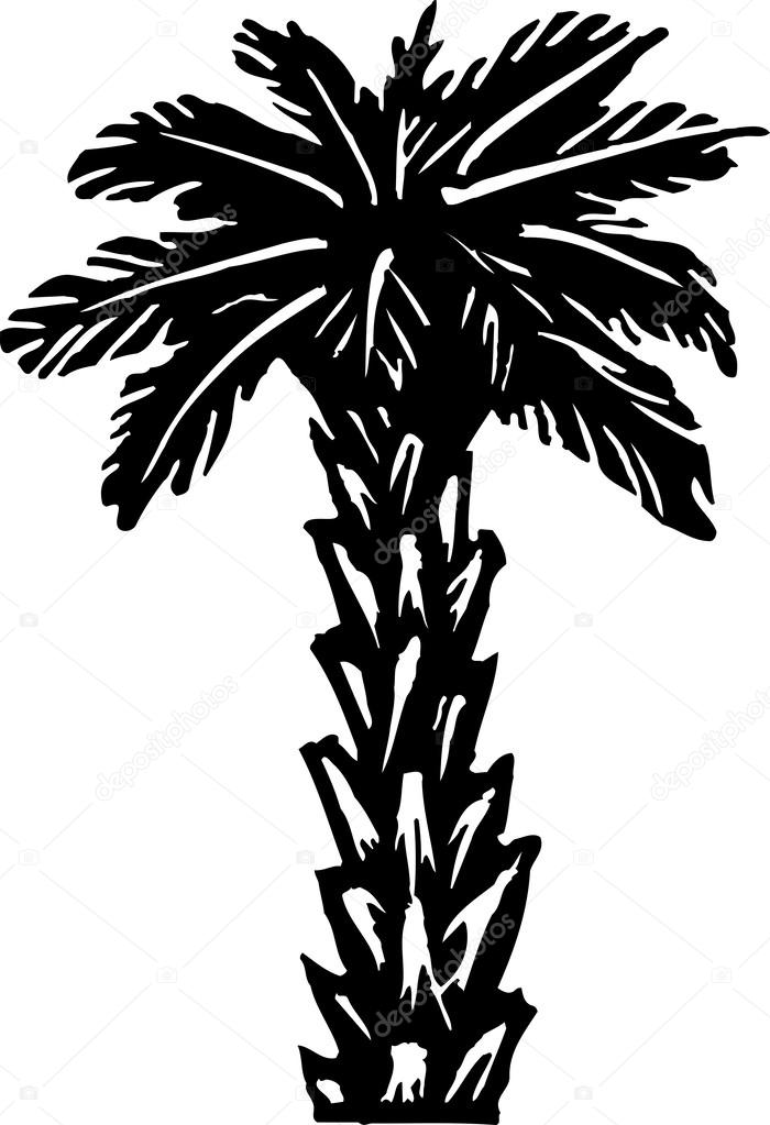 700x1023 Palm Tree Stock Vector Ronjoe