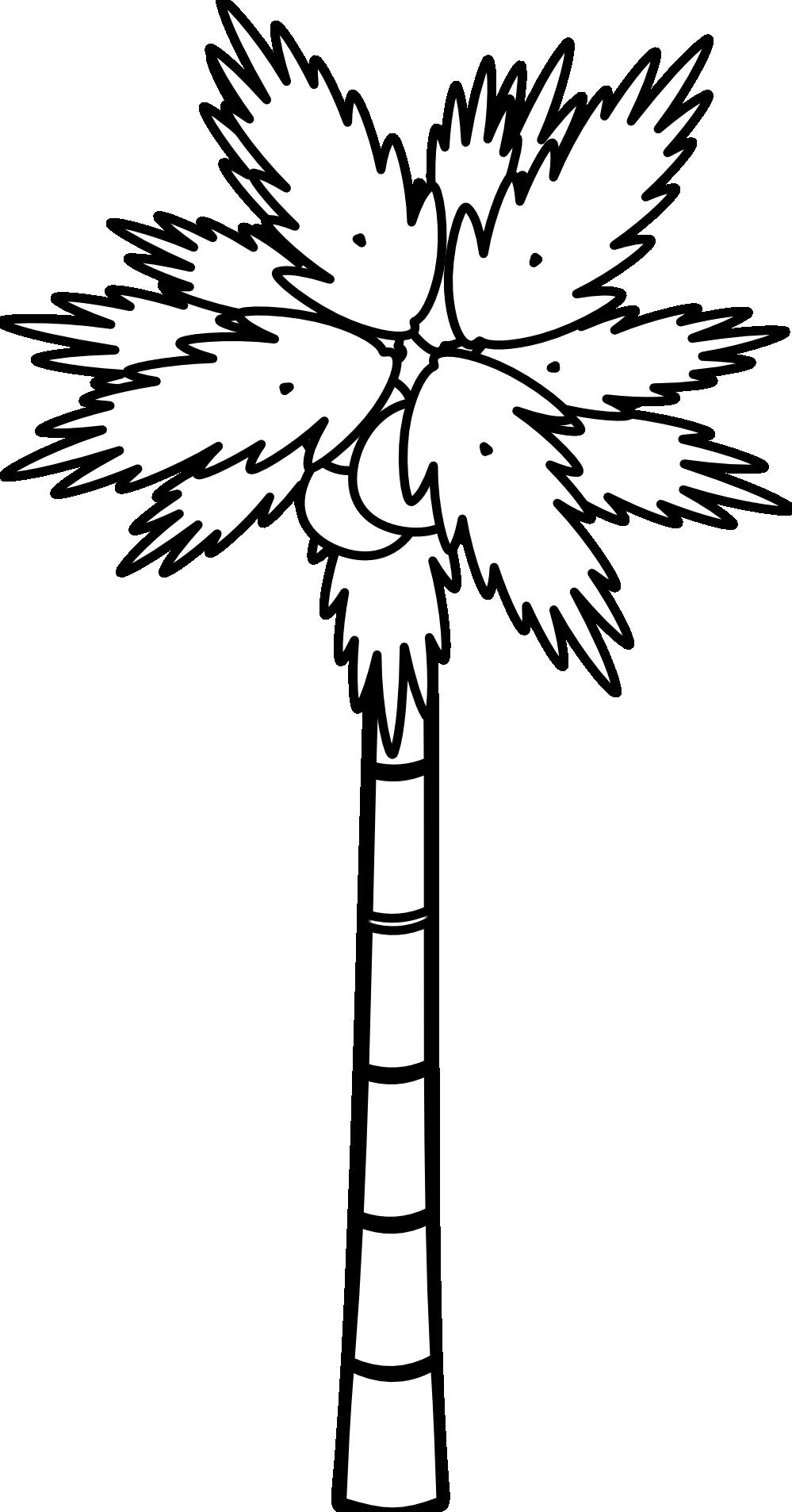 999x1906 Palm Tree Black White Line Png Clipart