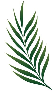 236x381 Palm Tree Leaf Png Clip Art Leaves Only Palm Tree