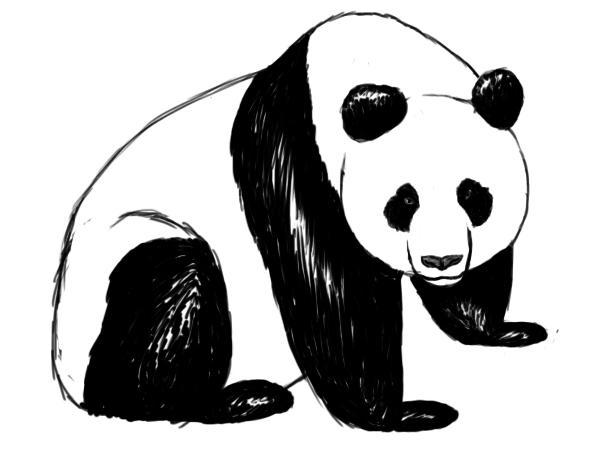 600x450 Drawn Panda