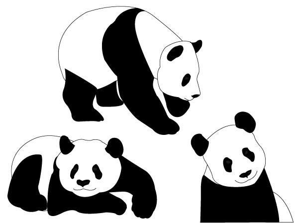 601x448 Graphics For Panda Bear Graphics