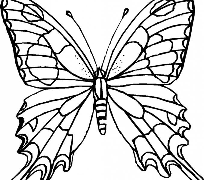 678x600 Butterfly Picture Outline Kids Coloring