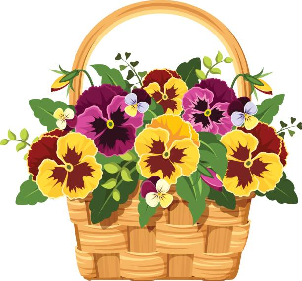 612x570 Pansy Clipart Collection