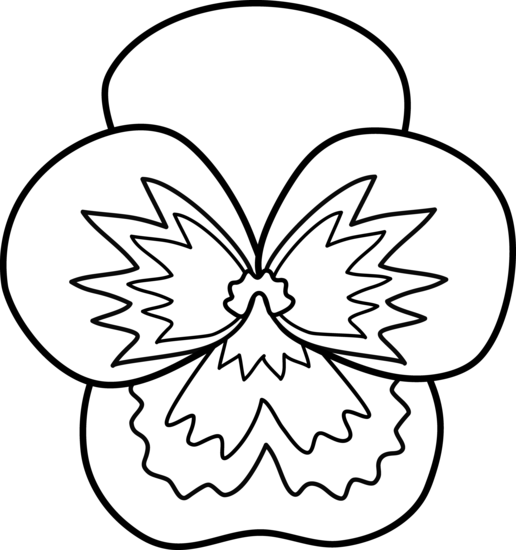 516x550 Pansy Flower Line Art