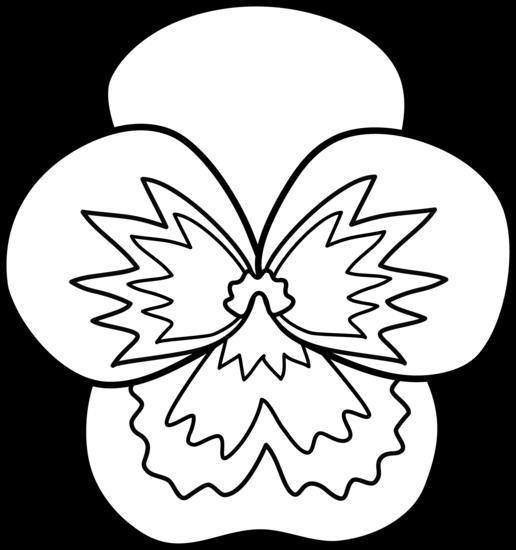516x550 Pansy Flower Line Art