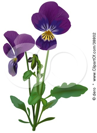 327x450 Pansy Clipart Purple