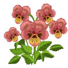 236x236 Pansy. Botanical Art, Botanical Painting, Flower Painting