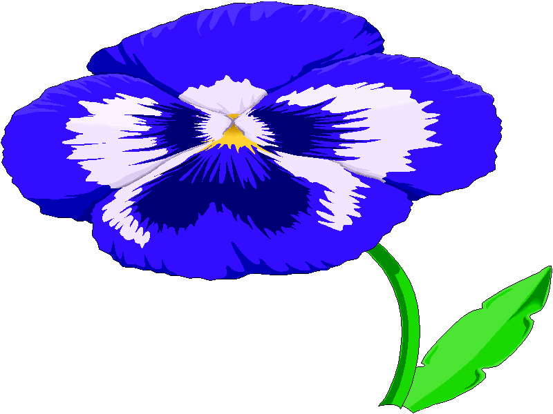 800x600 Violet Clipart Pansy